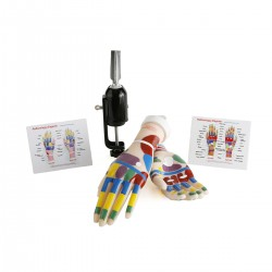 Reflexology Hands Tool Kit...